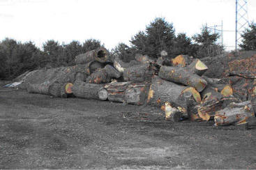Logs To Lumber And Beyond